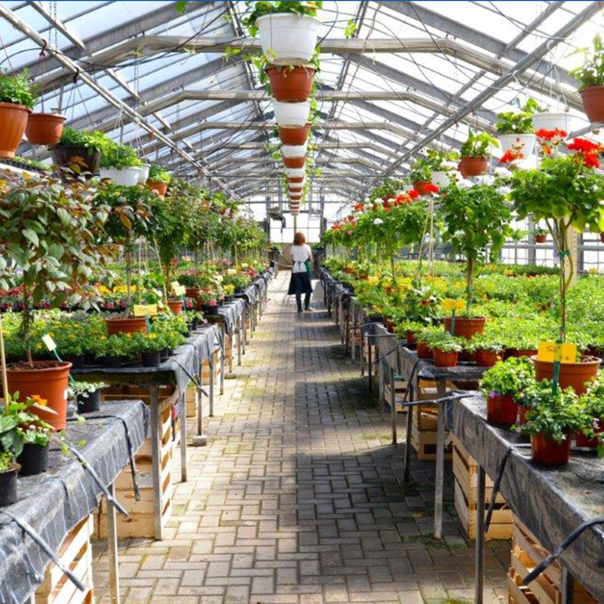 Gärtnerei Gewächshaus mit Pflanzen